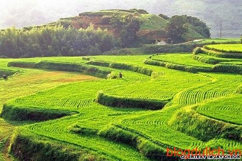 Ruộng bậc thang Hapcheon
