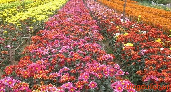 lang hoa tay tuu