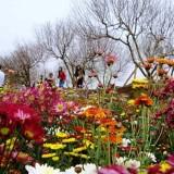 Những làng hoa ở Hà Nội