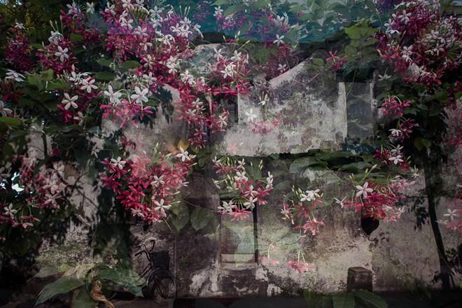 Những giàn hoa rung rinh trước cửa nhà.