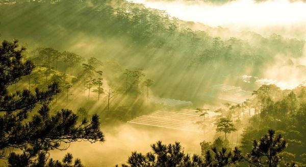 Đà Lạt bồng bềnh trong sương sớm