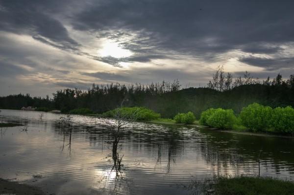Rừng ngập mặn ở Vũng Tàu