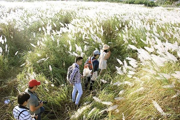 chụp ảnh mùa cỏ lau đà nẵng