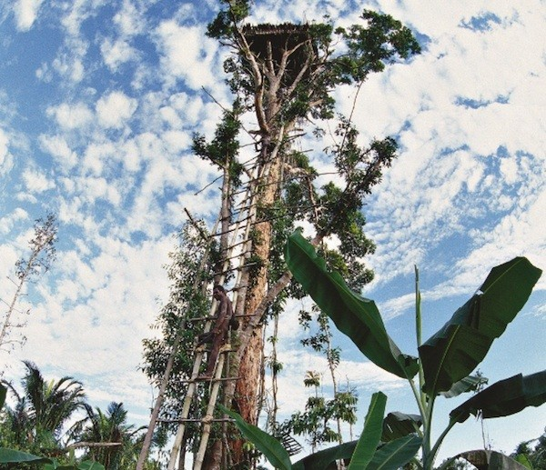 Nhà trên cây ở Tây Nam tỉnh Irian Jaya