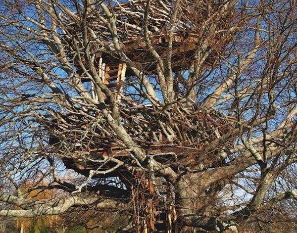nhà cây Lake – Nest