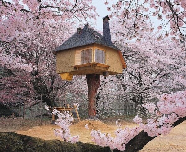 Trà đạo quán Nhật Bản