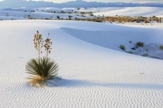 Chiêm ngưỡng vẻ đẹp lung linh của 3 đồi cát ở Miền Trung
