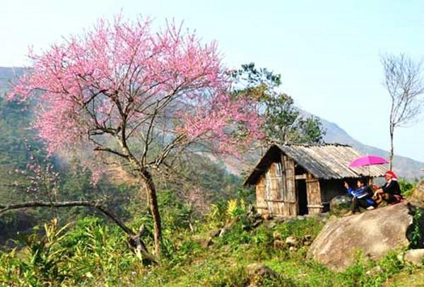 Những điểm đến trong nước cuốn hút du khách dịp tết Ất Mùi 2015
