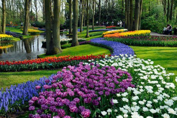 Sự sắp xếp tuyệt vời ở vườn hoa Keukenhof