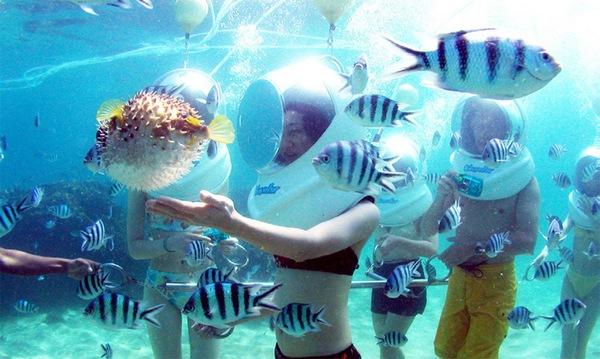 Khám phá đại dương với tour đi bộ dưới đáy biển