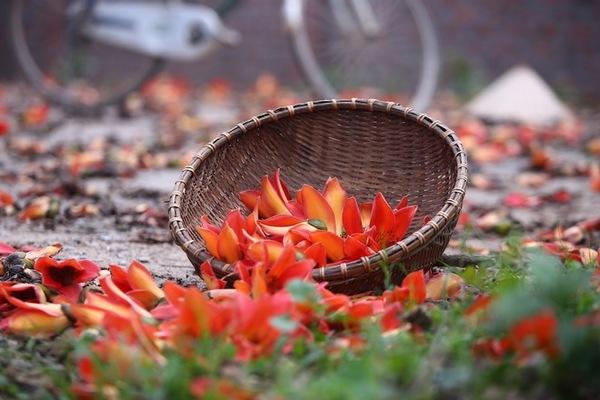 Loài hoa bình dị nhưng mang sức sống lạ kỳ