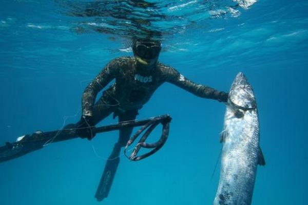 lặn và bắn cá sẽ là trải nghiệm thú vị bạn nên thử hè này
