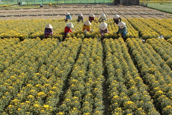 Theo chân những người nông dân ra đồng để trải nghiệm cuộc sống nông dân Chăm thực sự